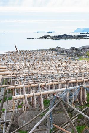 stockfish: Sea view with Stockfish drying