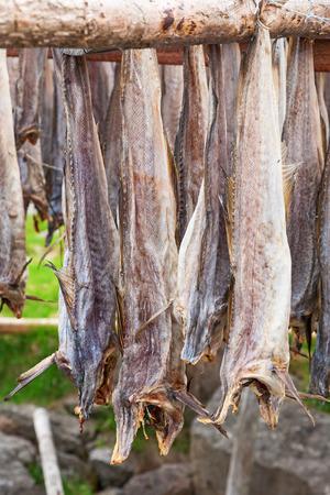 stockfish: Stockfish drying outdoors on a rack