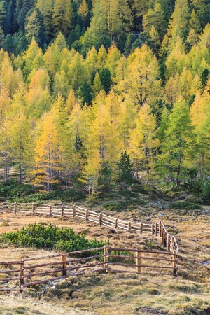 osttirol: Wooden fence in the meadow at fall Stock Photo