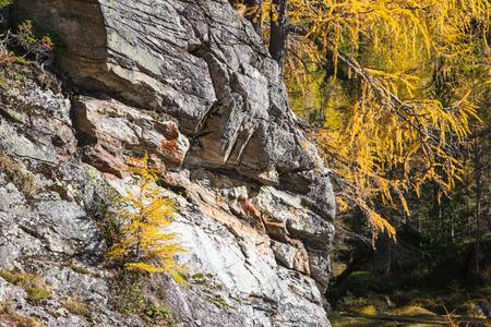 osttirol: Rock wall in a forest