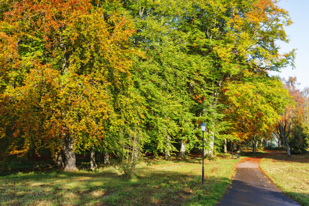 walking path: Walking path in a park landscape in autumn Stock Photo