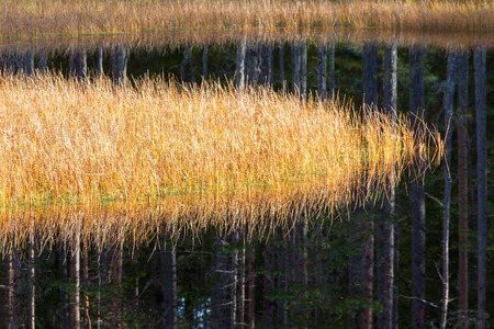 reflecting: Grass and forest reflecting in the water
