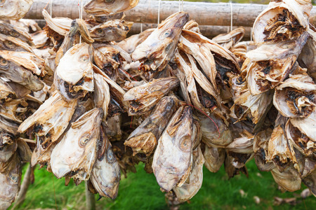 stockfish: Cods head hanging to dry Stock Photo