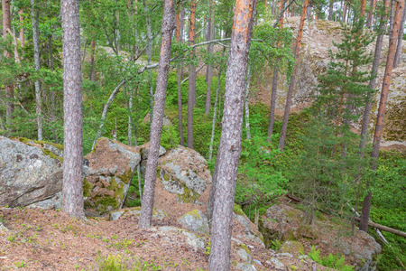 treetrunk: Forest with rocks in wild terrain Stock Photo