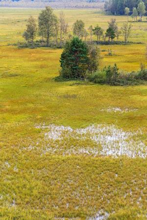 arboleda: por pantanos, arboleda