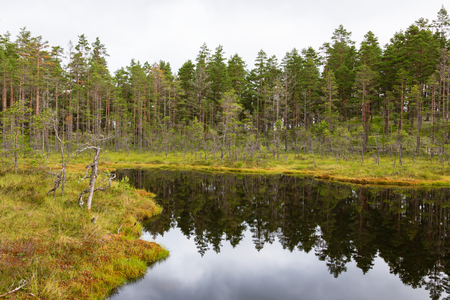 Forest lake in taiga wilderness
