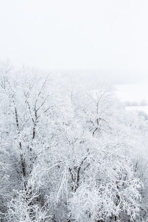 hoarfrost: Trees with hoarfrost in the forest and fog Stock Photo