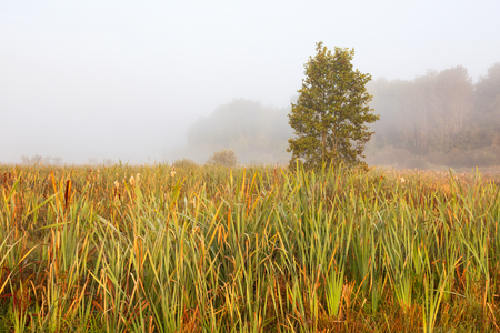 Grass blades on foggy moorland