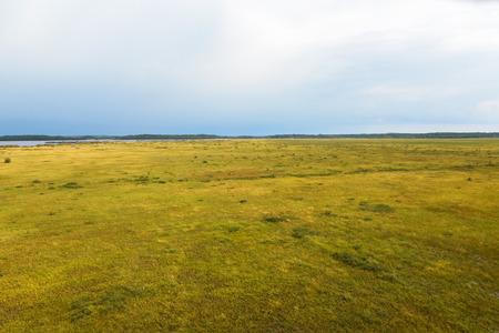 bog: Bog landscape view at the autumn