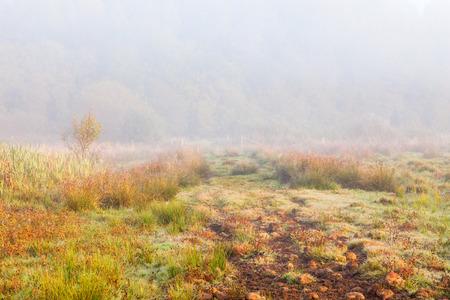 moor: Path on the moor in morning fog