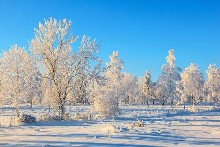 Trees in hoarfrost in the winter landscape Stock Photo