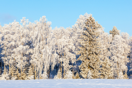 Wintry forest at a field with snow and frost