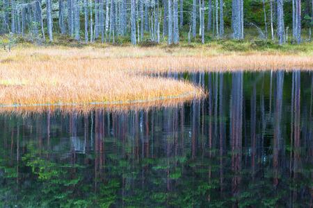 edge: Swamp grass at waters edge Stock Photo
