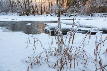 Frozen reeds by the river with snow and ice in winter light
