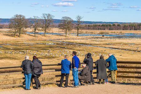 bird watcher: Bird watcher watching cranes at lake horborgasjon in Sweden