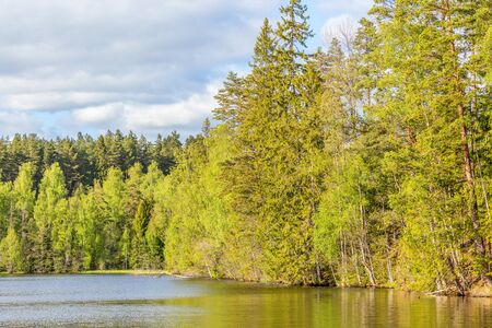 Forest lake with sunlit forest