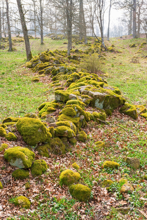 Stone wall with moss in the pasture in spring