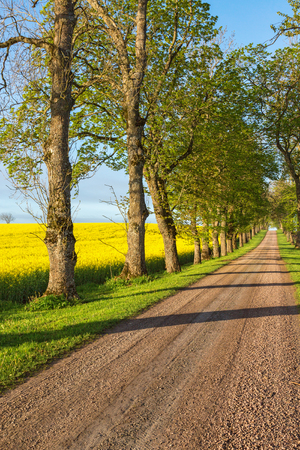 Country road alley in countryside landscape