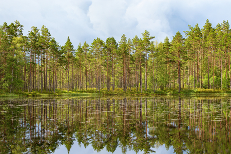 Pine tree forest at the lake with dark storm clouds in the sky
