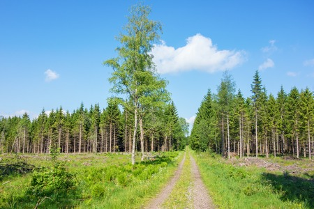 Straight forest road over a clearcutting area to the forest Stock Photo
