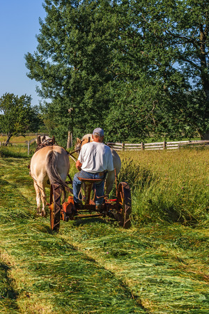 Haymaking in the old way with a pair of working horses