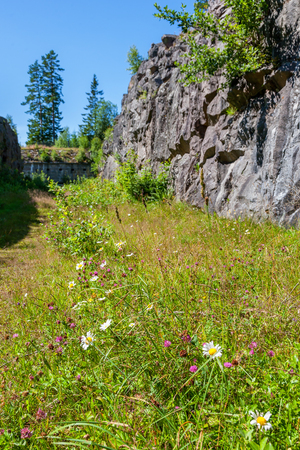 Wild flowers in the meadow into a moat