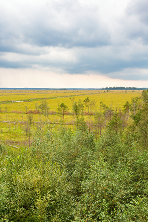 Forest at a bog with storm clouds in the sky Stock Photo