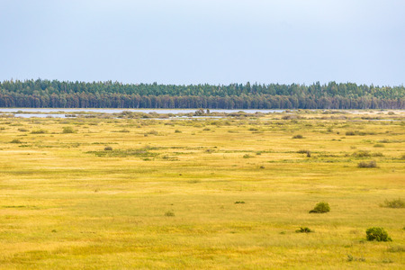 bogs: View of the lake and bogs landscapes Stock Photo