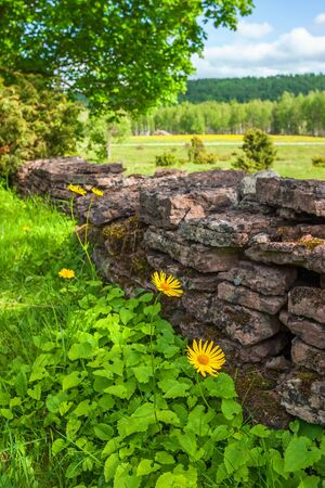 Flowers by a stone wall in the country Stock Photo