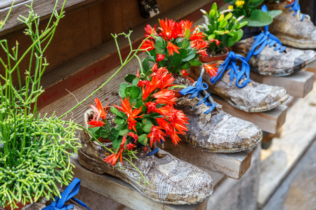 Plant cactus in old shoes