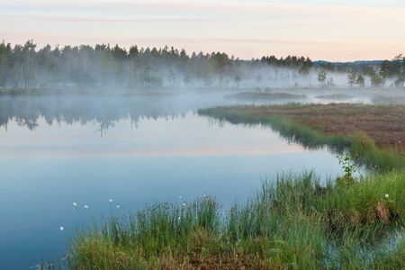Foggy morning at the forest lake Stock Photo