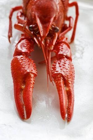 Crayfish on a white plate Stock Photo - 83780189