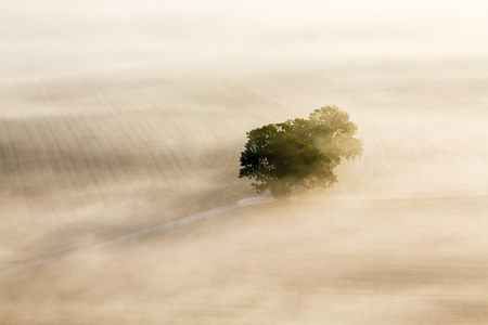 Morning fog with a lonely tree on a field