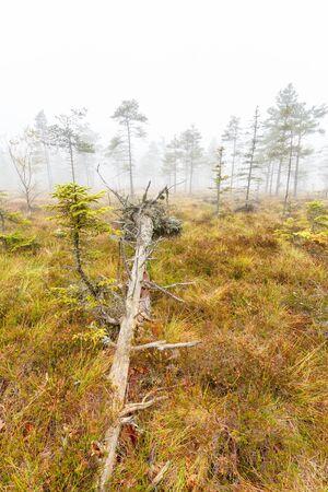 Fallen tree on a bog in fog