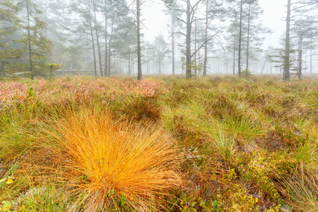 Close up of grass turf with fall colors on a bog