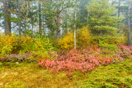 shrubbery: Autumn colors in the woods Stock Photo