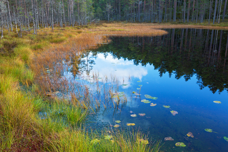 Grass on the beach in autumn forest landscape