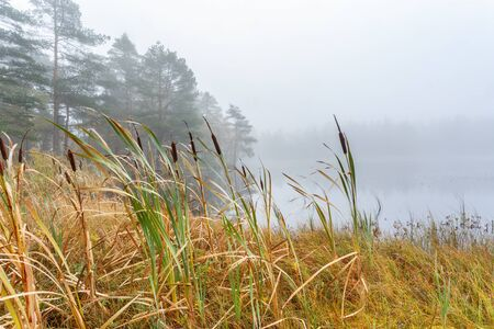 Wetland in fog at a forest lake