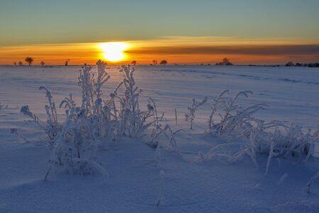 Sunset with frost and snow on the plants