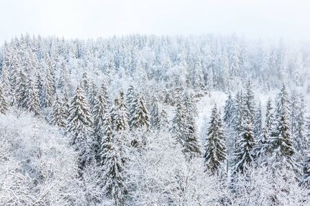 View of a forest in the winter with snow and frost