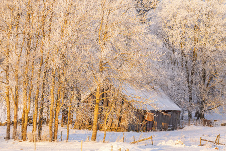 Old rustic barn in a winter landscape Stock Photo