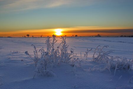 Sunset view of snowy fields with hoarfrost on the plants