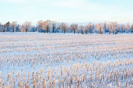 Stubble field with snow in a winter landscape