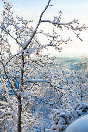 Snow covered branches and a winter landscape view