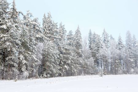 Winter forest landscape view with snow and frost