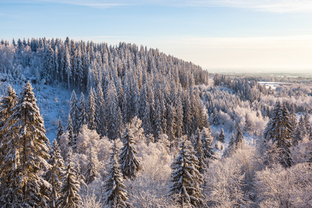 View of the forest landscape in winter Stock Photo