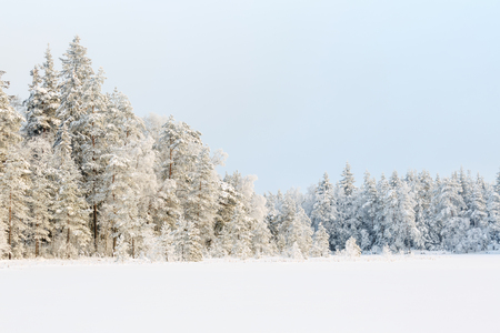 Wintry Landscape View at a forest with new snow and frost Stock Photo