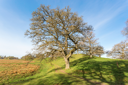 Path through pasture with oak trees Stock Photo