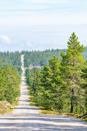 Coniferous forest with a long dirt road and a house Stock Photo