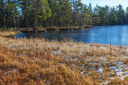 Zugefrorener See an einem Nadelwald